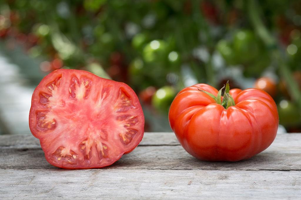 Maryland tomato