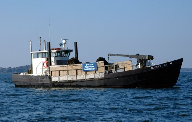 chesapeake bay oyster recovery