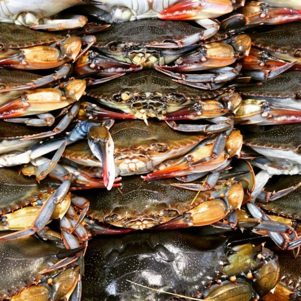 Soft Shell Crabs Prepared for Fried Soft Shells